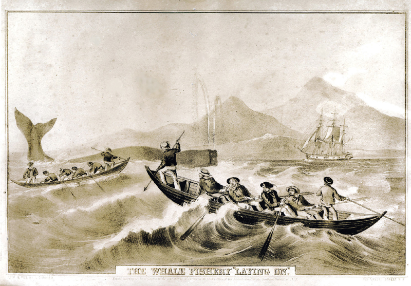 Drawing of men on a row boat trying to catch a whale.