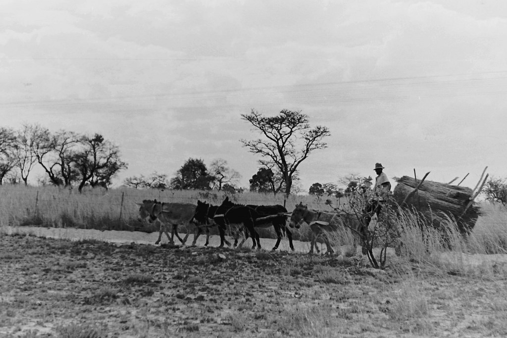 A man with a cart pulled by donkeys.