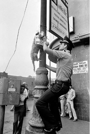 Man hanging a dog from a lamp post.